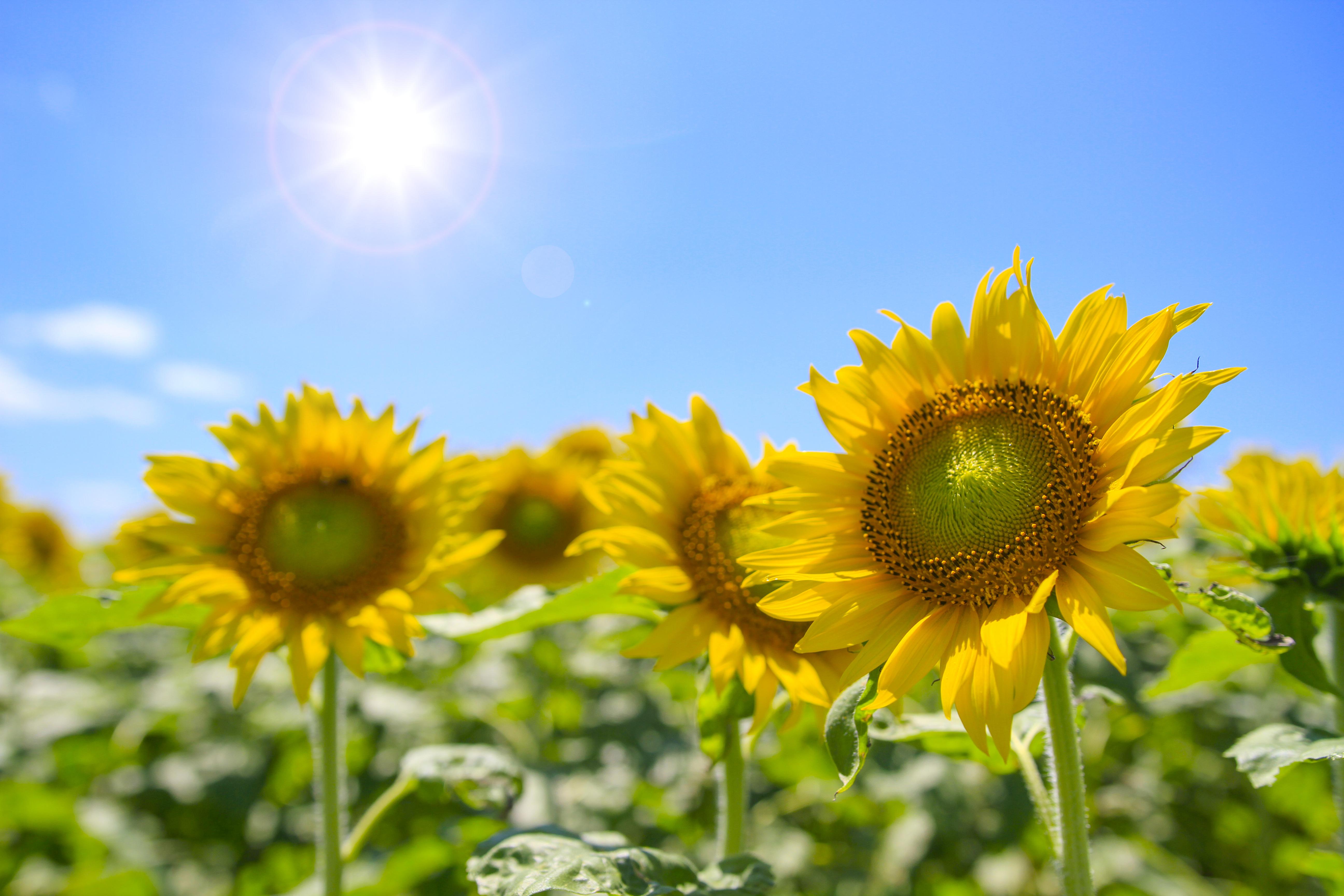 育つ環境が違えば咲く花も変わってくる