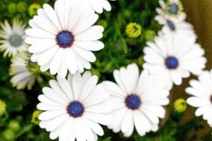 花にも個性があり、人にもあり。