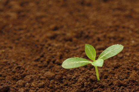 会社全体で管理職の芽を育てる